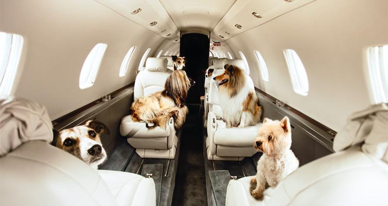 Charter Jet Animaux acceptés